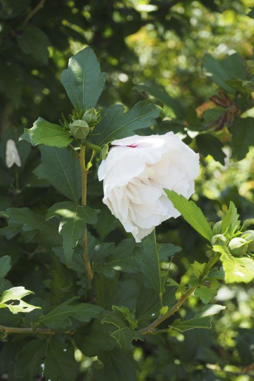 花ギフト|フラワーギフト|誕生日 花|カノシェ話題|スタンド花|ウエディングブーケ|花束|花屋|P8130095