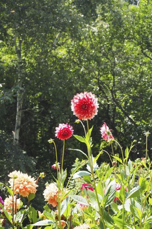 花ギフト|フラワーギフト|誕生日 花|カノシェ話題|スタンド花|ウエディングブーケ|花束|花屋|P8130155