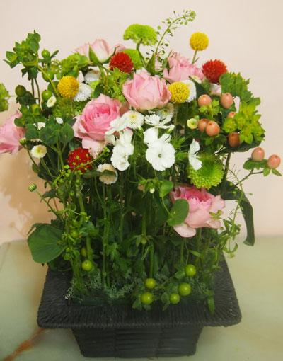 hiroesan-rose