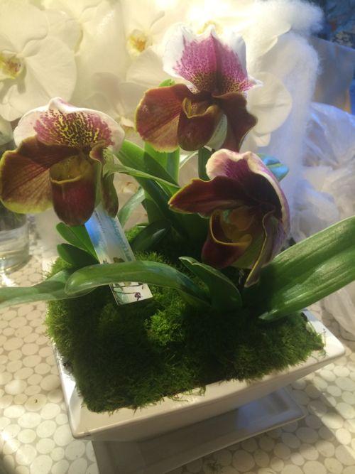 花ギフト|フラワーギフト|誕生日 花|カノシェ話題|スタンド花|ウエディングブーケ|花束|花屋|IMG_8445