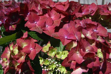 花ギフト|フラワーギフト|誕生日 花|カノシェ話題|スタンド花|ウエディングブーケ|花束|花屋|あじさい茶
