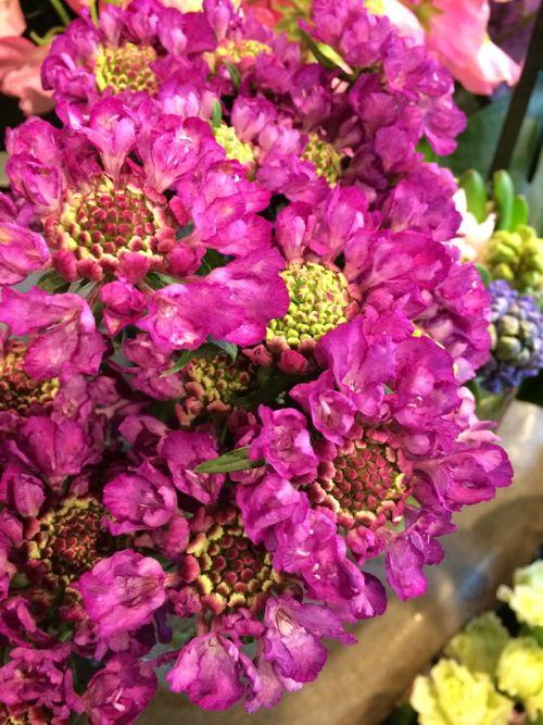 花ギフト|フラワーギフト|誕生日 花|カノシェ話題|スタンド花|ウエディングブーケ|花束|花屋|IMG_8907