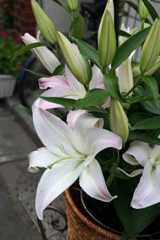 花ギフト|フラワーギフト|誕生日 花|カノシェ話題|スタンド花|ウエディングブーケ|花束|花屋|ウイル