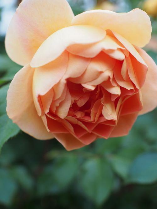 花ギフト|フラワーギフト|誕生日 花|カノシェ話題|スタンド花|ウエディングブーケ|花束|花屋|P1010816