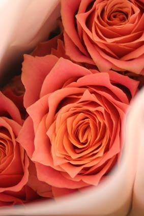 花ギフト|フラワーギフト|誕生日 花|カノシェ話題|スタンド花|ウエディングブーケ|花束|花屋|島さん4