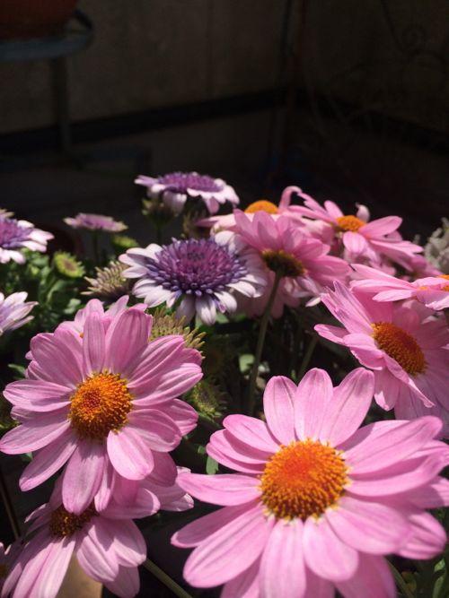 花ギフト|フラワーギフト|誕生日 花|カノシェ話題|スタンド花|ウエディングブーケ|花束|花屋|IMG_0081