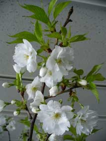 花ギフト|フラワーギフト|誕生日 花|カノシェ話題|スタンド花|ウエディングブーケ|花束|花屋|やまざくら
