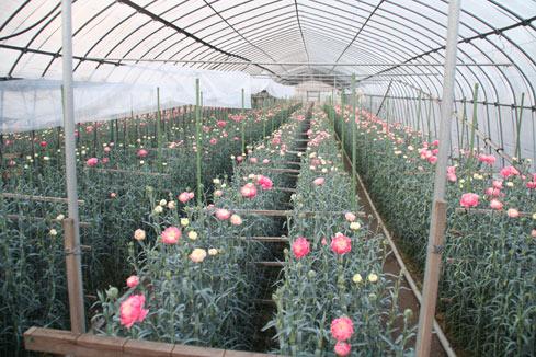 花ギフト|フラワーギフト|誕生日 花|カノシェ話題|スタンド花|ウエディングブーケ|花束|花屋|カーネ畑