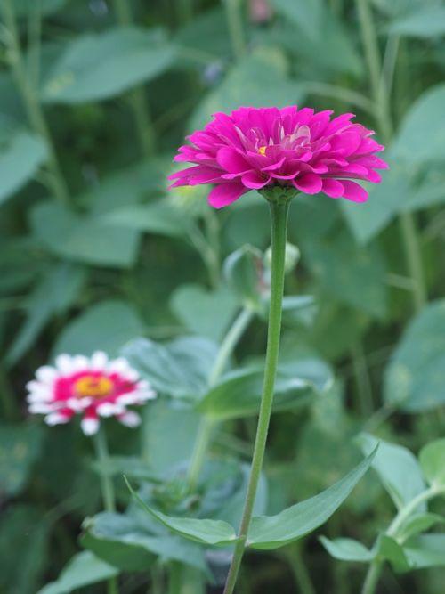 花ギフト|フラワーギフト|誕生日 花|カノシェ話題|スタンド花|ウエディングブーケ|花束|花屋|P8150149