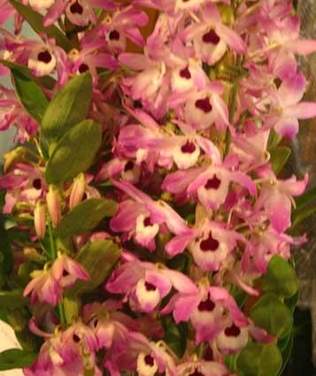花ギフト|フラワーギフト|誕生日 花|カノシェ話題|スタンド花|ウエディングブーケ|花束|花屋|デンドロ