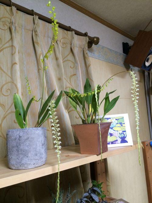 花ギフト|フラワーギフト|誕生日 花|カノシェ話題|スタンド花|ウエディングブーケ|花束|花屋|IMG_9676