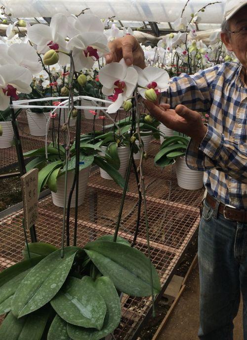 花ギフト|フラワーギフト|誕生日 花|カノシェ話題|スタンド花|ウエディングブーケ|花束|花屋|IMG_6582