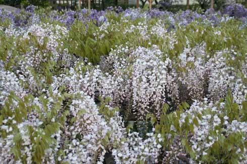 花ギフト|フラワーギフト|誕生日 花|カノシェ話題|スタンド花|ウエディングブーケ|花束|花屋|二色