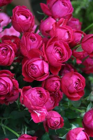 花ギフト|フラワーギフト|誕生日 花|カノシェ話題|スタンド花|ウエディングブーケ|花束|花屋|IMG_9478