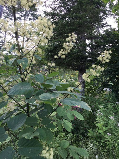 花ギフト|フラワーギフト|誕生日 花|カノシェ話題|スタンド花|ウエディングブーケ|花束|花屋|IMG_3362