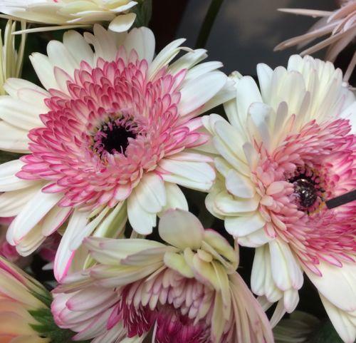 花ギフト|フラワーギフト|誕生日 花|カノシェ話題|スタンド花|ウエディングブーケ|花束|花屋|IMG_7983