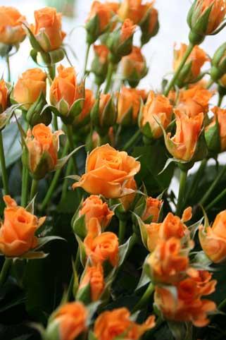 花ギフト|フラワーギフト|誕生日 花|カノシェ話題|スタンド花|ウエディングブーケ|花束|花屋|マカレナ