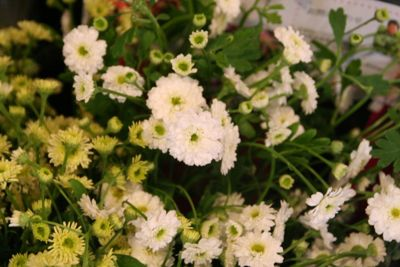 花ギフト|フラワーギフト|誕生日 花|カノシェ話題|スタンド花|ウエディングブーケ|花束|花屋|IMG_6949