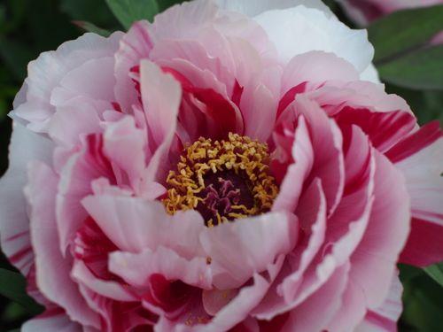 花ギフト|フラワーギフト|誕生日 花|カノシェ話題|スタンド花|ウエディングブーケ|花束|花屋|P1010692