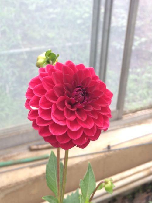 花ギフト|フラワーギフト|誕生日 花|カノシェ話題|スタンド花|ウエディングブーケ|花束|花屋|IMG_5441
