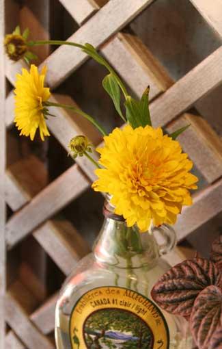 花ギフト|フラワーギフト|誕生日 花|カノシェ話題|スタンド花|ウエディングブーケ|花束|花屋|ルドベキア