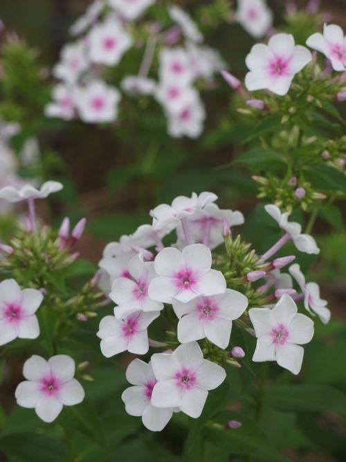 花ギフト|フラワーギフト|誕生日 花|カノシェ話題|スタンド花|ウエディングブーケ|花束|花屋|P8150186