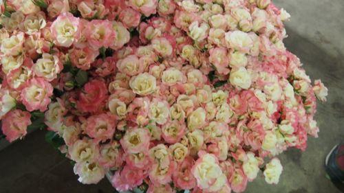 花ギフト|フラワーギフト|誕生日 花|カノシェ話題|スタンド花|ウエディングブーケ|花束|花屋|P1011105