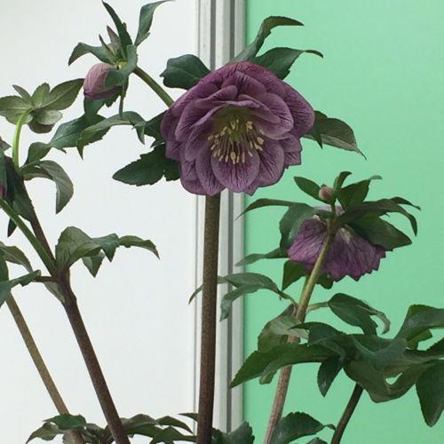 花ギフト|フラワーギフト|誕生日 花|カノシェ話題|スタンド花|ウエディングブーケ|花束|花屋|IMG_9526