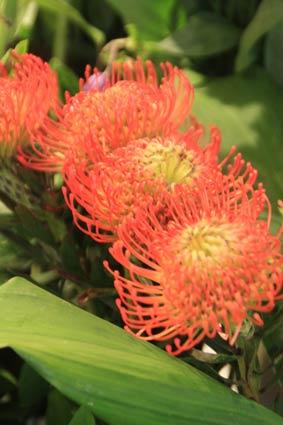 花ギフト|フラワーギフト|誕生日 花|カノシェ話題|スタンド花|ウエディングブーケ|花束|花屋|IMG_4300