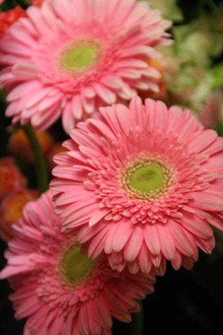 花ギフト|フラワーギフト|誕生日 花|カノシェ話題|スタンド花|ウエディングブーケ|花束|花屋|キャシー
