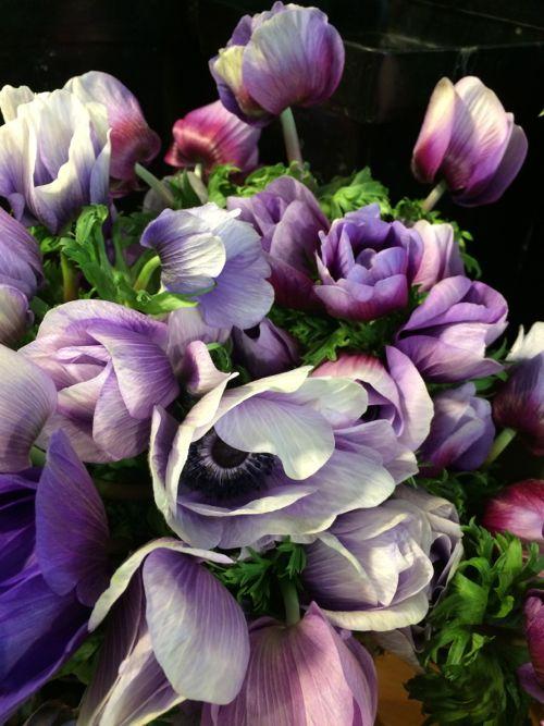 花ギフト|フラワーギフト|誕生日 花|カノシェ話題|スタンド花|ウエディングブーケ|花束|花屋|IMG_9326
