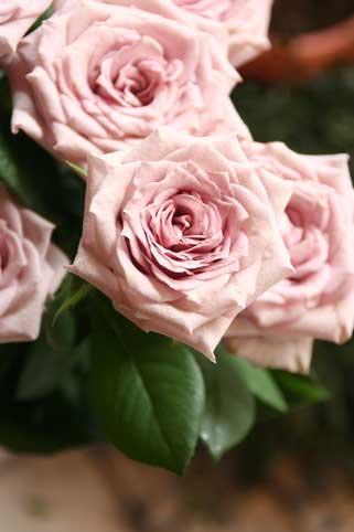 花ギフト|フラワーギフト|誕生日 花|カノシェ話題|スタンド花|ウエディングブーケ|花束|花屋|モーニング