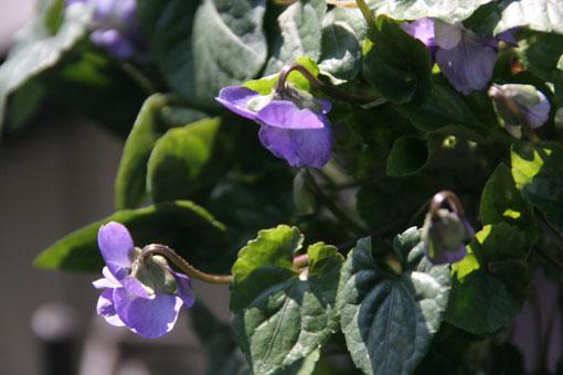 花ギフト|フラワーギフト|誕生日 花|カノシェ話題|スタンド花|ウエディングブーケ|花束|花屋|においすみれ