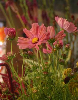 花ギフト|フラワーギフト|誕生日 花|カノシェ話題|スタンド花|ウエディングブーケ|花束|花屋|コスモス