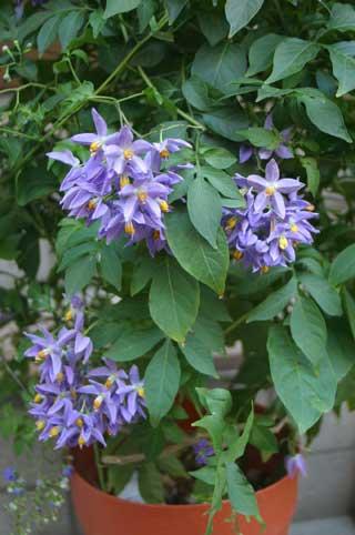 花ギフト|フラワーギフト|誕生日 花|カノシェ話題|スタンド花|ウエディングブーケ|花束|花屋|山ほろし