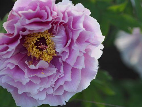 花ギフト|フラワーギフト|誕生日 花|カノシェ話題|スタンド花|ウエディングブーケ|花束|花屋|P1010636