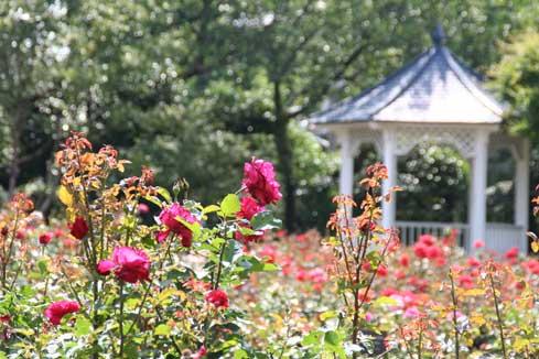 花ギフト|フラワーギフト|誕生日 花|カノシェ話題|スタンド花|ウエディングブーケ|花束|花屋|港バラ
