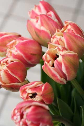 花ギフト|フラワーギフト|誕生日 花|カノシェ話題|スタンド花|ウエディングブーケ|花束|花屋|ケープランドギフト