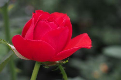 花ギフト|フラワーギフト|誕生日 花|カノシェ話題|スタンド花|ウエディングブーケ|花束|花屋|P1011326