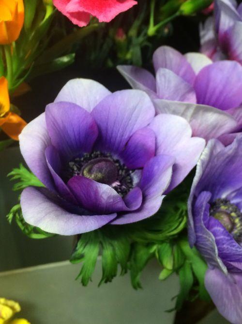 花ギフト|フラワーギフト|誕生日 花|カノシェ話題|スタンド花|ウエディングブーケ|花束|花屋|IMG_9355