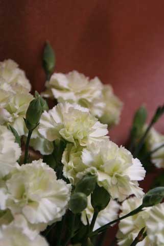 花ギフト|フラワーギフト|誕生日 花|カノシェ話題|スタンド花|ウエディングブーケ|花束|花屋|カーネ