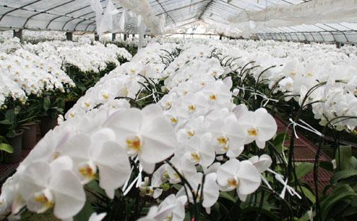 花ギフト|フラワーギフト|誕生日 花|カノシェ話題|スタンド花|ウエディングブーケ|花束|花屋|畑