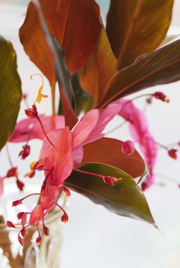 花ギフト|フラワーギフト|誕生日 花|カノシェ話題|スタンド花|ウエディングブーケ|花束|花屋|P9250470