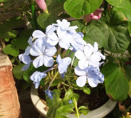 花ギフト|フラワーギフト|誕生日 花|カノシェ話題|スタンド花|ウエディングブーケ|花束|花屋|rurimaturi