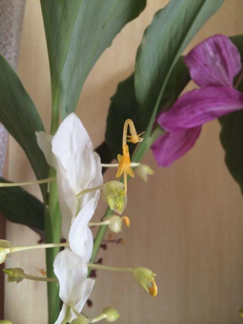 花ギフト|フラワーギフト|誕生日 花|カノシェ話題|スタンド花|ウエディングブーケ|花束|花屋|IMG_7437