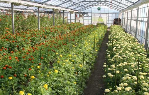 花ギフト|フラワーギフト|誕生日 花|カノシェ話題|スタンド花|ウエディングブーケ|花束|花屋|ハウス2