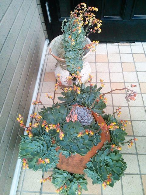 花ギフト|フラワーギフト|誕生日 花|カノシェ話題|スタンド花|ウエディングブーケ|花束|花屋|NCM_0665