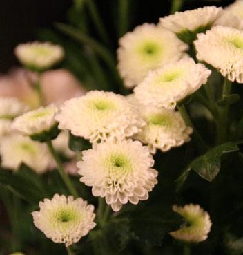 花ギフト フラワーギフト 誕生日 花 カノシェ話題 スタンド花 ウエディングブーケ 花束 花屋 IMG_0113