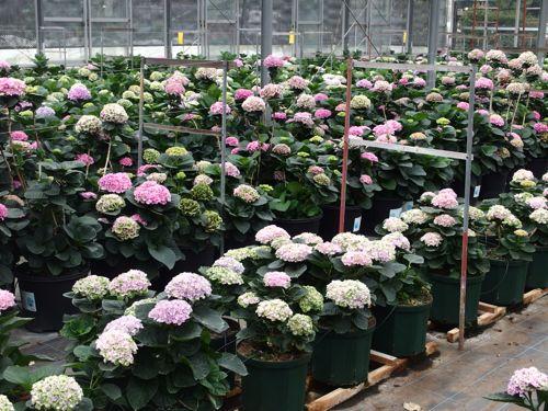 花ギフト|フラワーギフト|誕生日 花|カノシェ話題|スタンド花|ウエディングブーケ|花束|花屋|P6080074