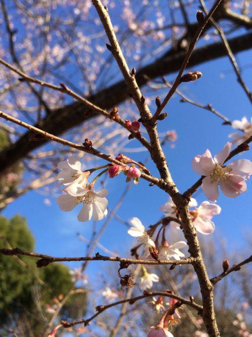 花ギフト|フラワーギフト|誕生日 花|カノシェ話題|スタンド花|ウエディングブーケ|花束|花屋|IMG_0561